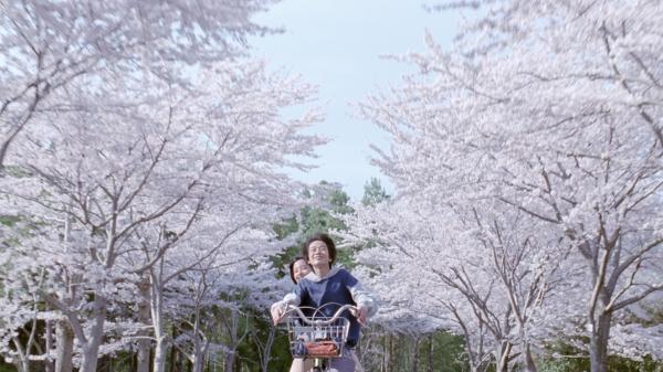 umimachi-cerisier.jpg